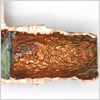 Copper-Pipe-Corrosion